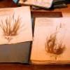 Le Muséum Nationale d'Histoire Naturelle stocke les images numérisées du Grand Herbier