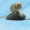 Sigma Méditerranée / Geranimaux 2.0 : logiciel de gestion d'animalerie de laboratoire